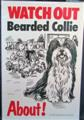 Watch out Bearded collie